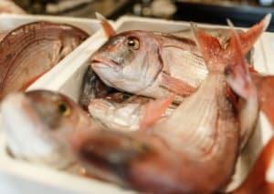 pescados y mariscos primavera