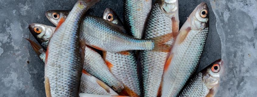 pescado fresco